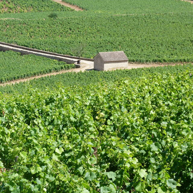 """View of the vineyard from the """"Montagne"""" de Beaune ©BeauneTourisme"""