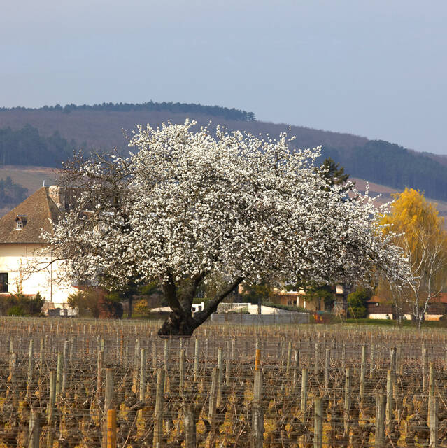 8 things to do in Pays Beaunois in the spring