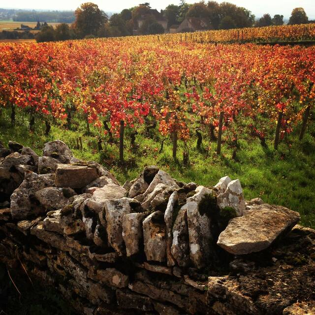 Burgundy Autumn ©ALBonin