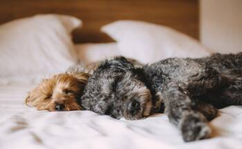 To go off for a weekend or holiday with your dog with complete peace of mind