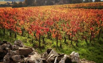 Burgundy Autumn ©ALBonin