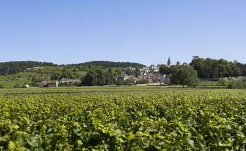 Wine Tours in Burgundy near Beaune