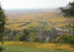 Burgundy Wine Region - Côte de Beaune - Pernand-Vergelesses