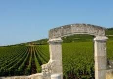 Clos des Avaux near Beaune