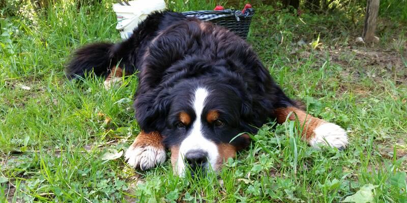 le chien de Kayane