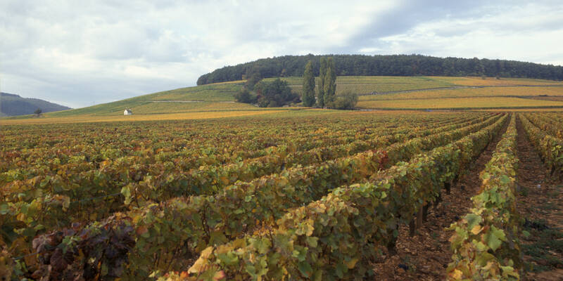 the Montagne de Corton hill