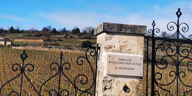 Courir dans les Vignobles de Bourgogne