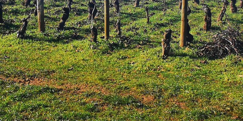 Courir dans les Vignes de Côte de Beaune - Bourgogne