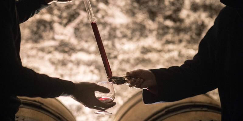 Wines Auction : Wines Tasting - @M.Joly