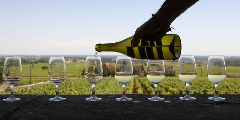 Wine Tasting © Studio Piffaut