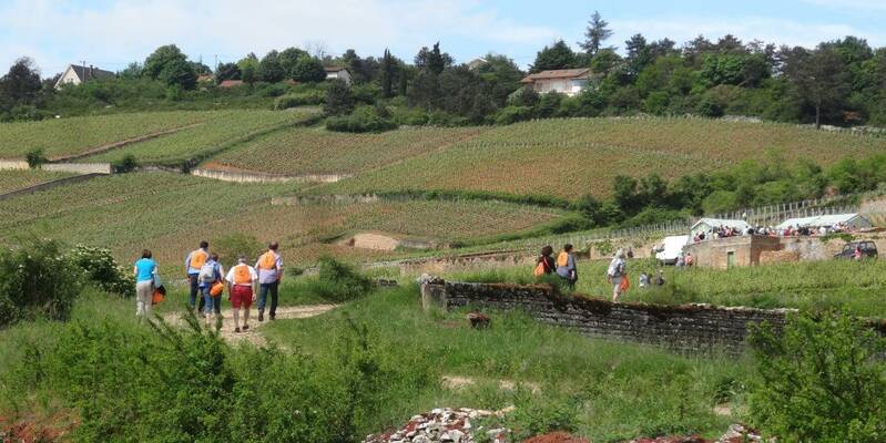 In the vineyards of Beaune © LDallerey