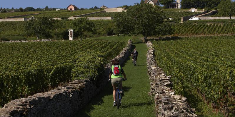 Meursault vineyards  - Burgundy wine © Studio Piffaut