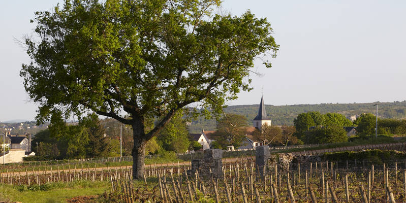 Chassagne-Montrachet village © Atelier photo Muzard