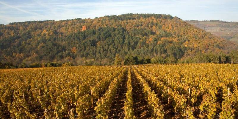 The vineyards of Nantoux Beaune Tourisme © atelier Muzard