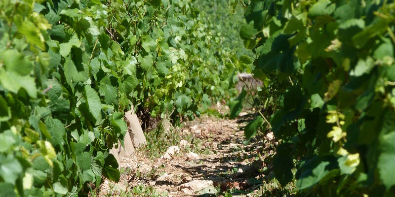 Vineyard in Beaune ©BeauneTourisme