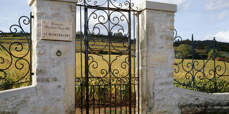 Montrachet's vineyards