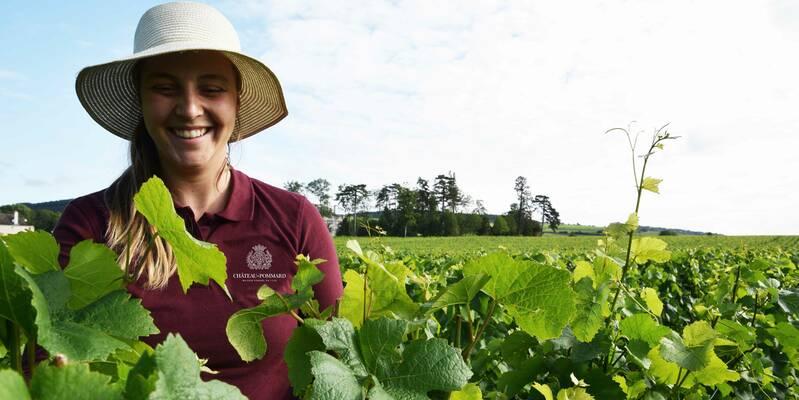 Burgundy harvest team at Château de Pommard - Bourgogne