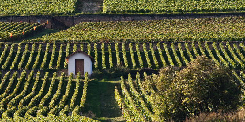 Vineyards © Jean-Louis Bernuy