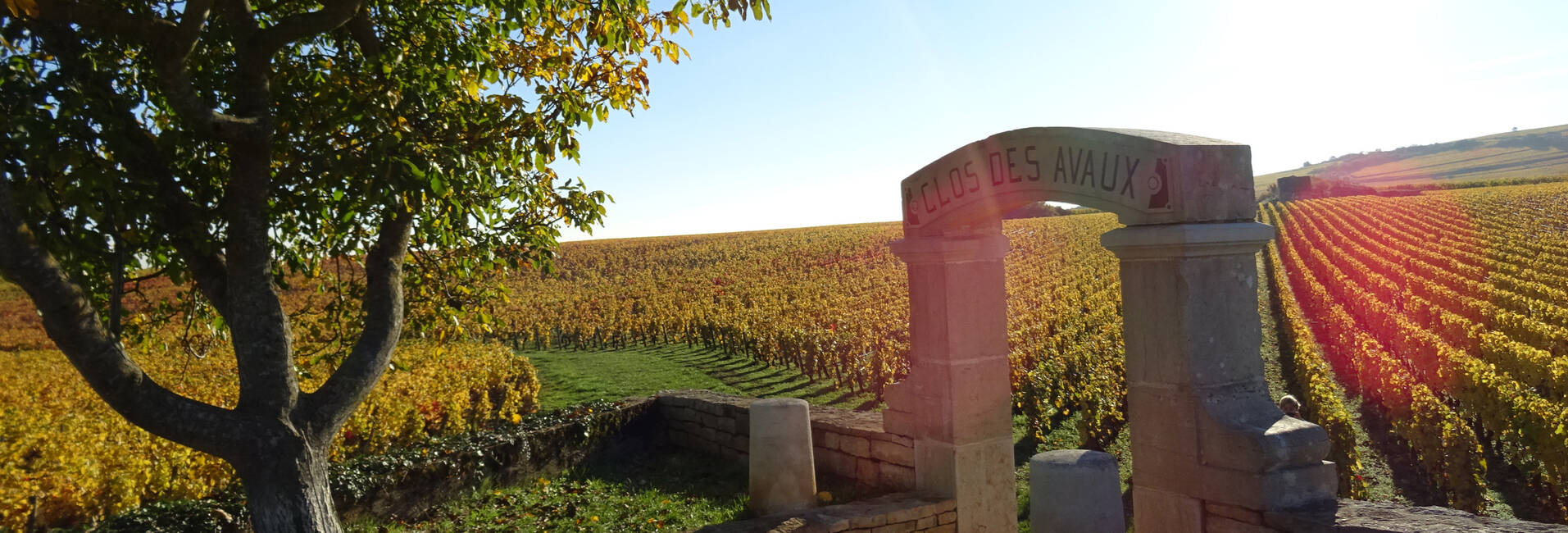 Wine Tours around Beaune in Burgundy