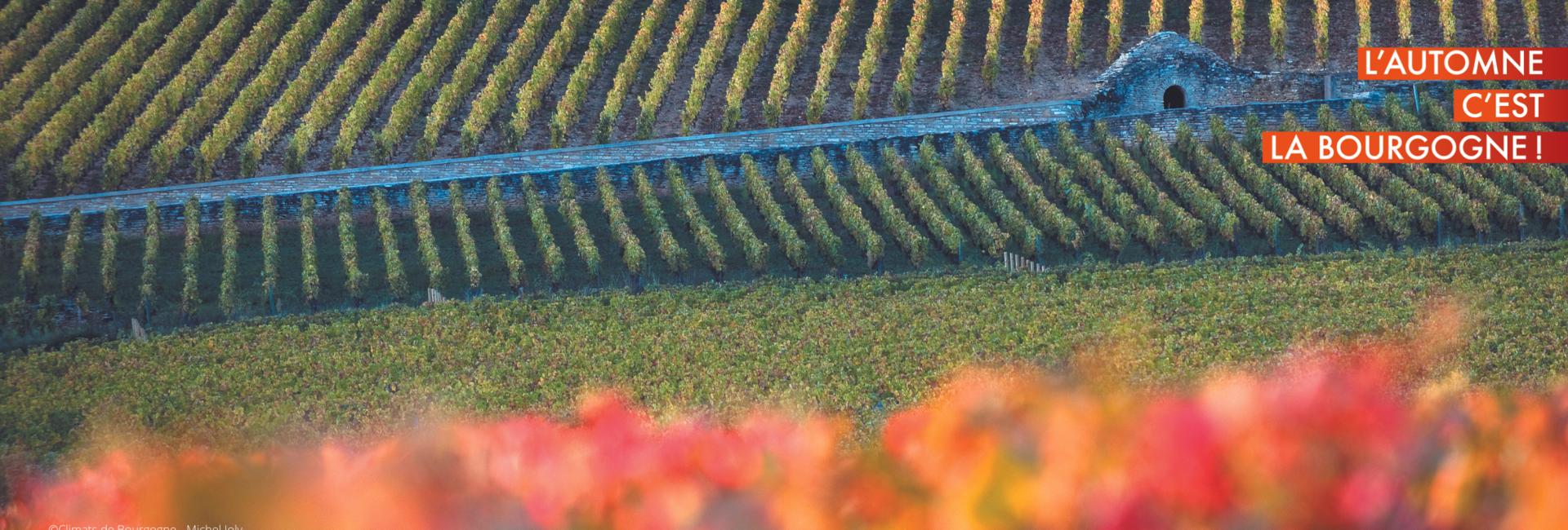 Climats Bourgogne Beaune © Michel Joly