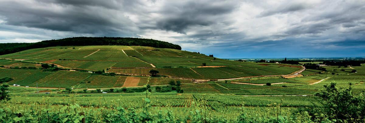 Colline de Corton - Beaune - Bourgogne