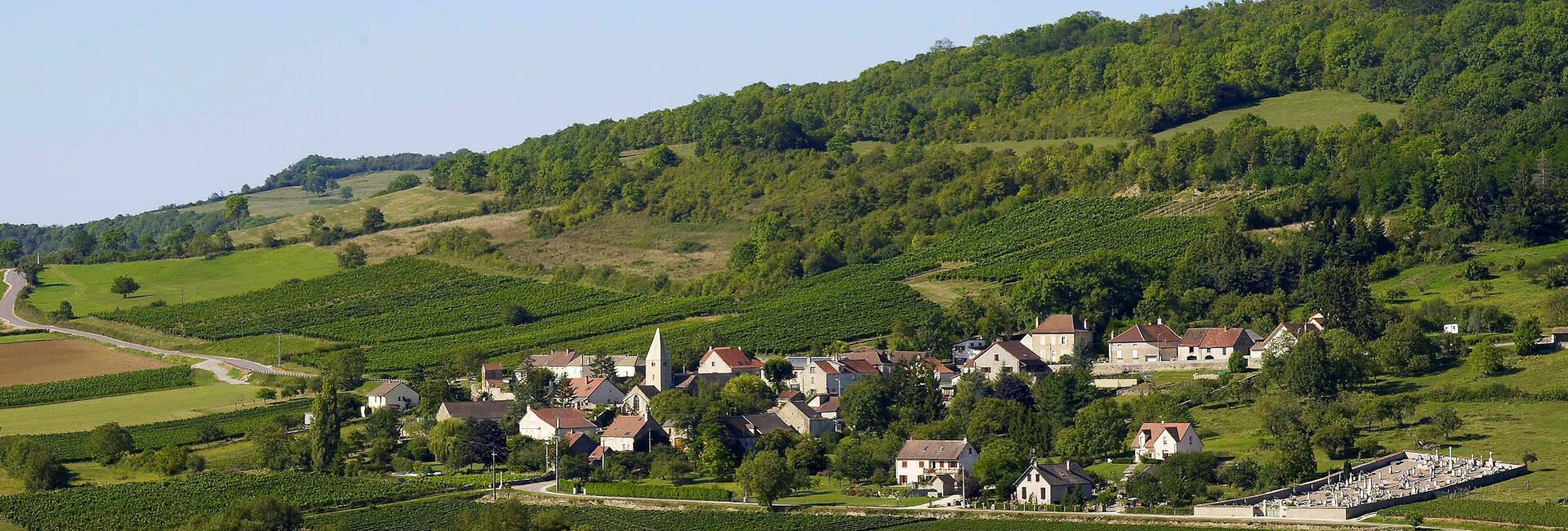 Vineyards around Beaune © Images et associés