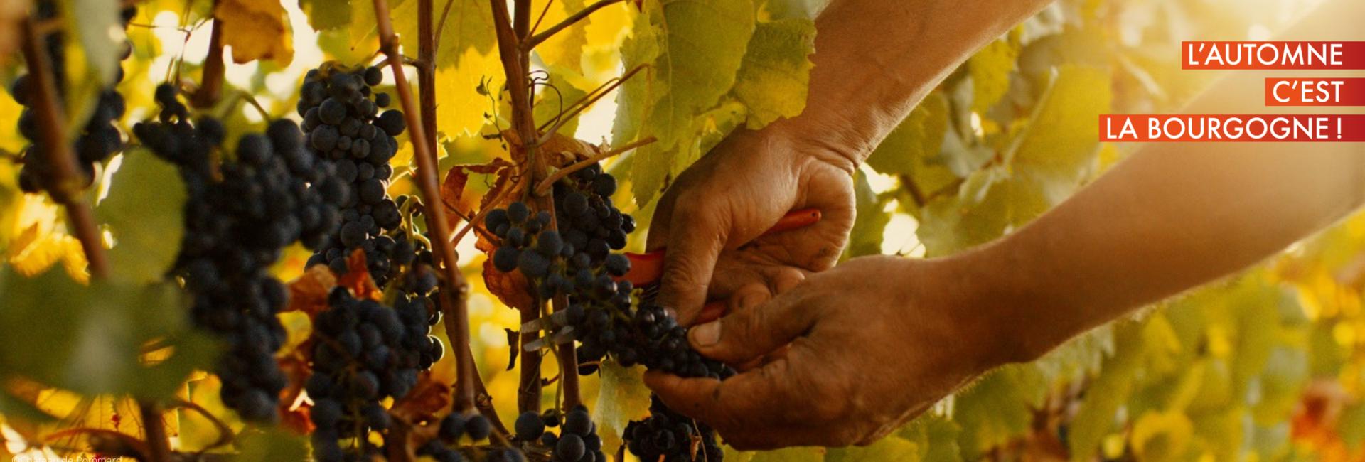 Vineyards around Beaune © Château de Pommard