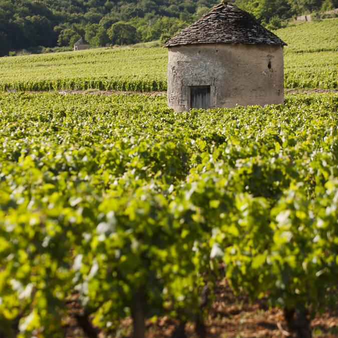 """""""Cabotte"""" (vineyard hut)"""