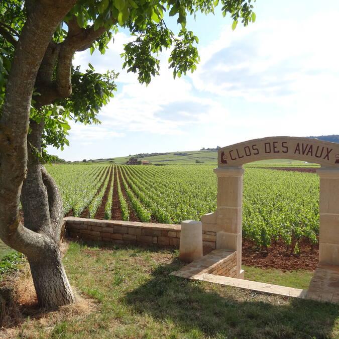 Vineyard © L. Dallerey